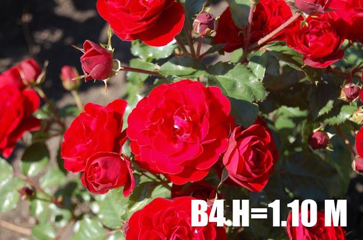 B4 H=1