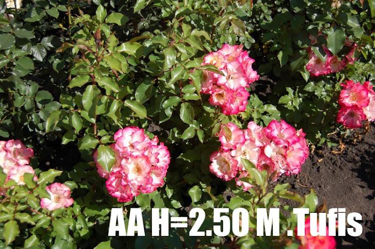 AA H=2.50 M
