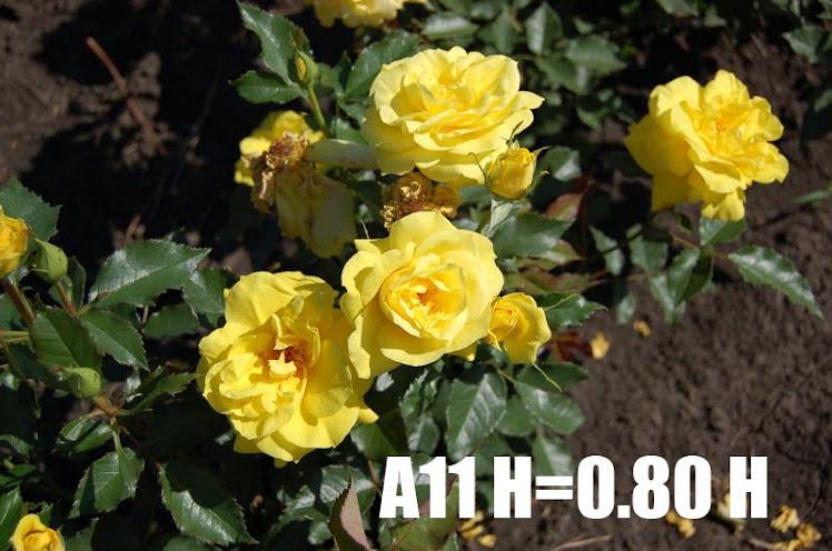 A11 H=0