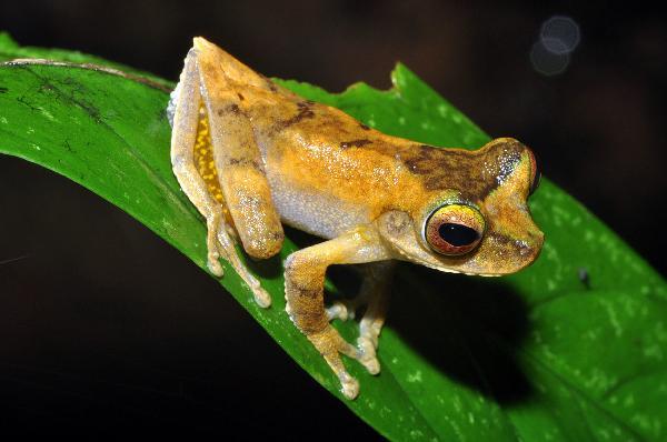 200 nowych gatunkow odkryli naukowcy na Papui Nowej Gwinei - 6, pazd. 2010