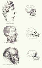 "Ch. Darwin's ""Favoured Skulls"""