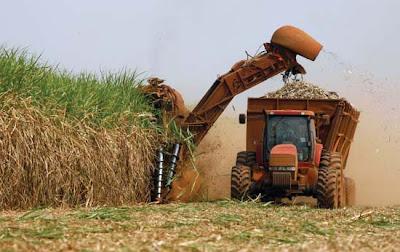 Brazil harvesting sugarcane