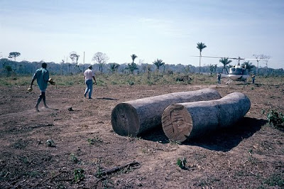 Logging in Acre