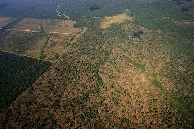 Deforestation in Pará