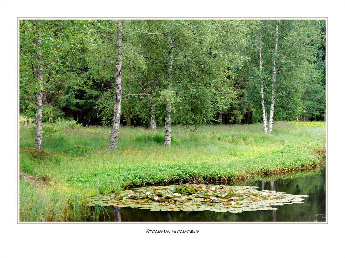 Observations num riques jardin flottant for Jardin flottant