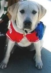 Dog Training Near Loomis Ca