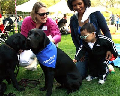 A young guest at the Blind Babies anniversary celebration pets a GDB dog.