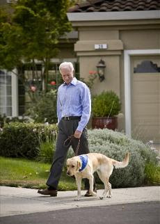 Captain Sully with GDB breeder dog Fame. Photo by Martin Klimek, Special for USA TODAY