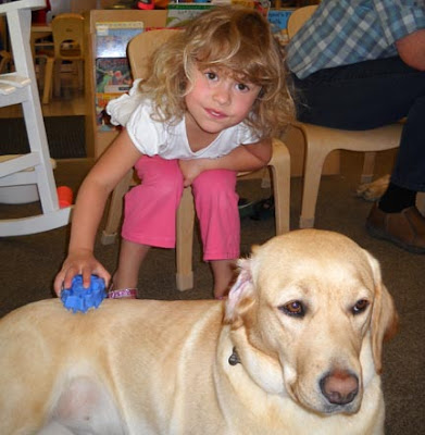 A young girl grooming Lucette, a yellow Lab
