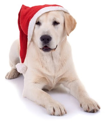 Yellow Lab wearing a Santa hat