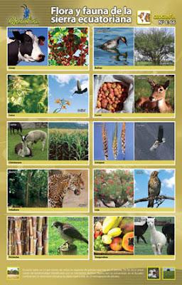 external image E-066+Flora+y+fauna+de+la+sierra+ecuatoriana.jpg