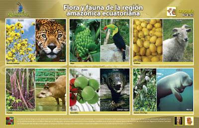 external image E-067+flora+y+fauna+del+oriente+ecuatoriano.jpg