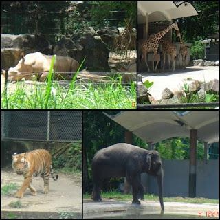 zoo plak...