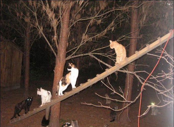 http://3.bp.blogspot.com/_mmBw3uzPnJI/S-RJ-vvuvZI/AAAAAAABOyw/KyGRvrKZd5w/s1600/homeless_cats_36.jpg