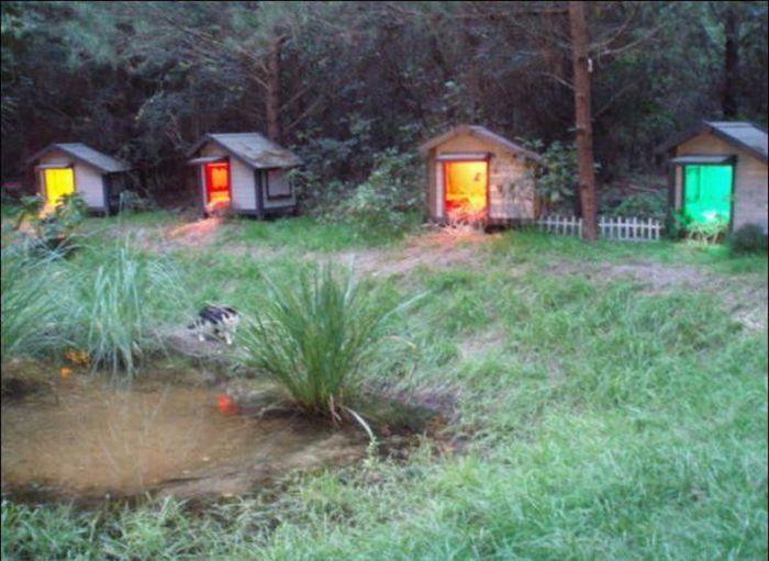 http://3.bp.blogspot.com/_mmBw3uzPnJI/S-RKwHnYmhI/AAAAAAABOzo/tRX1XndYtD4/s1600/homeless_cats_29.jpg