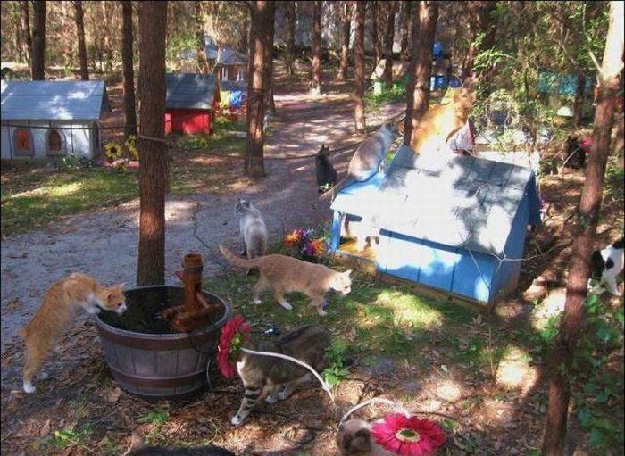 http://3.bp.blogspot.com/_mmBw3uzPnJI/S-RLEVZzbyI/AAAAAAABO0g/oFueB0KkFFA/s1600/homeless_cats_22.jpg