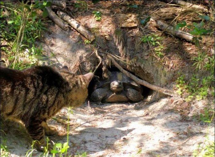 http://3.bp.blogspot.com/_mmBw3uzPnJI/S-RLV78F8iI/AAAAAAABO1g/OxLEZnMXoPU/s1600/homeless_cats_14.jpg
