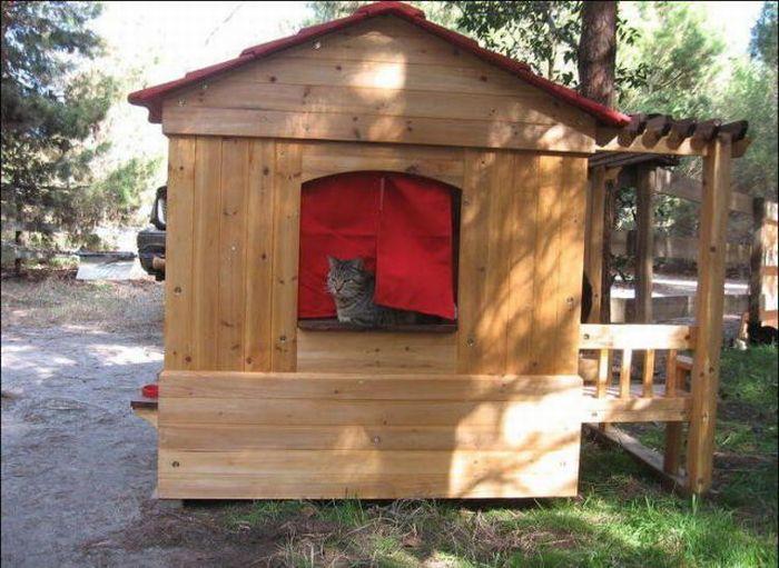 http://3.bp.blogspot.com/_mmBw3uzPnJI/S-RLWL2smOI/AAAAAAABO1o/JKRuZ-9hiS0/s1600/homeless_cats_13.jpg