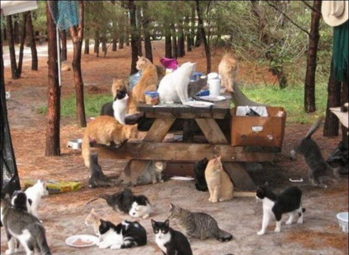 http://3.bp.blogspot.com/_mmBw3uzPnJI/S-RLgrFGeLI/AAAAAAABO2Y/qmOwj4sqnKU/s1600/homeless_cats_07.jpg
