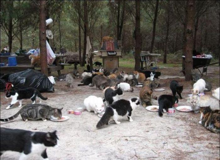 http://3.bp.blogspot.com/_mmBw3uzPnJI/S-RLplaOijI/AAAAAAABO2w/Wuf_fpmapwk/s1600/homeless_cats_04.jpg