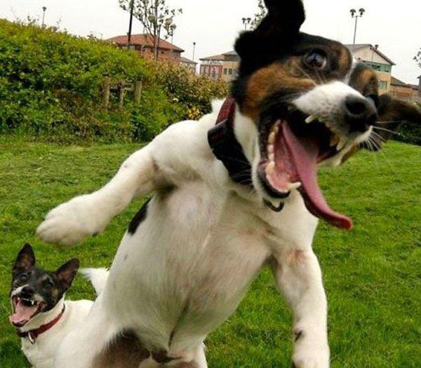 Anjing Gila Stres