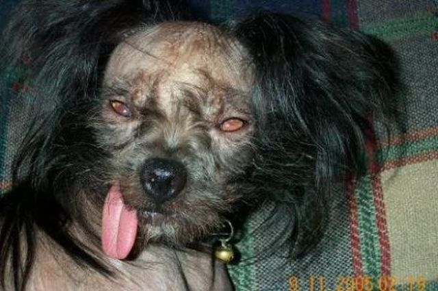 DooB Picture: 20 Ugliest Dogs Ever