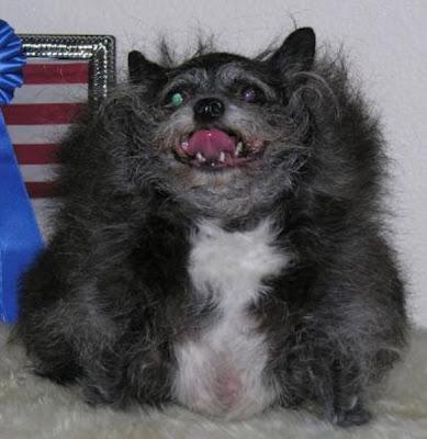 os cães mais feios do mundo
