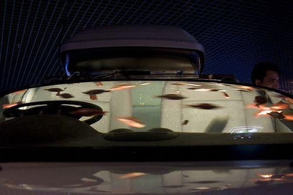 Car Fish Tank Aquarium