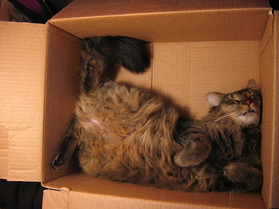 Gattilicious  =^.^= Cats_sleeping_in_box_17
