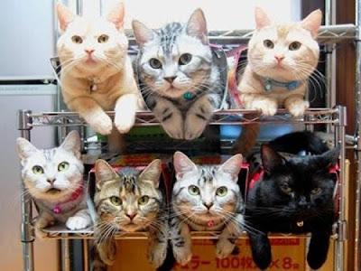 100 طريقة لتحزين القطط