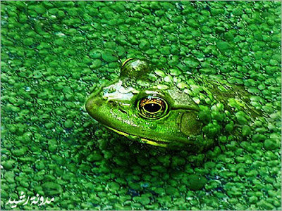 Camouflage Animals Pictures to Print