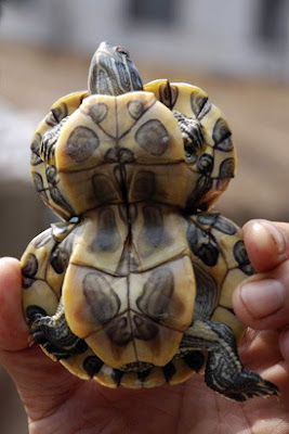 Weirdest Deformed Animals of the World