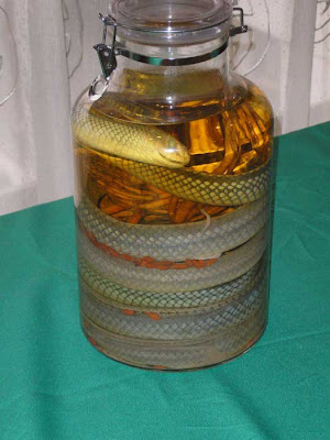 Snake Wine Seen On CoolPictureGallery.blogspot.com Or www.CoolPictureGallery.com
