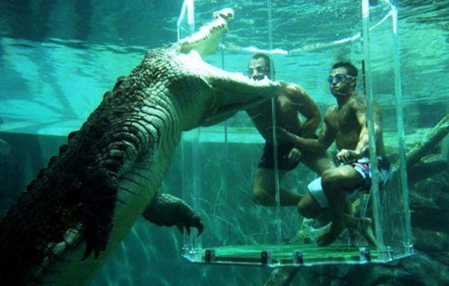 Gaiola da Morte, um encontro com crocodilos