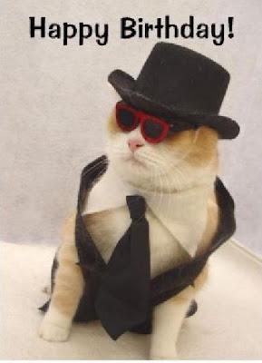 kucing narsis, kucing terlucu, kucing lucu, kucing paling lucu, kucing unik