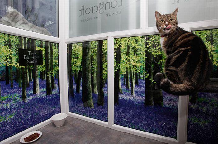 فندق خمسه نجوم للقطط luxury_cat_hotel_in_uk_07.jpg