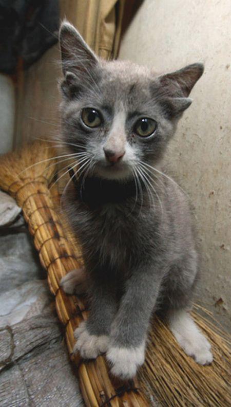 big cat rescue center indiana