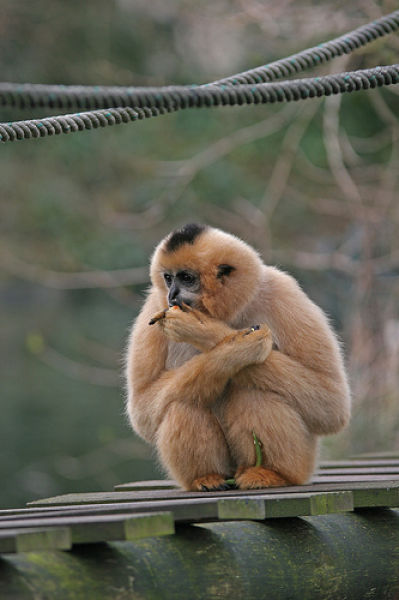 Cool Animals Pictures 25 Smoking Monkeys
