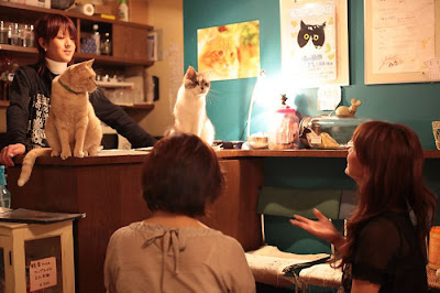 Tokyo's Cat Cafe Seen On  www.coolpicturegallery.us
