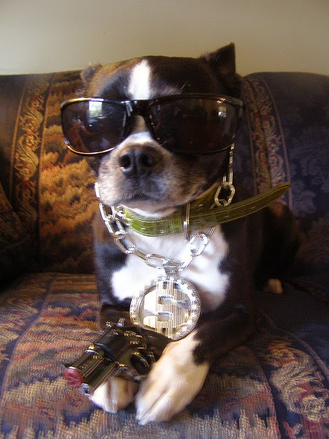 Gangsta Dogs ~ Damn Cool Pictures
