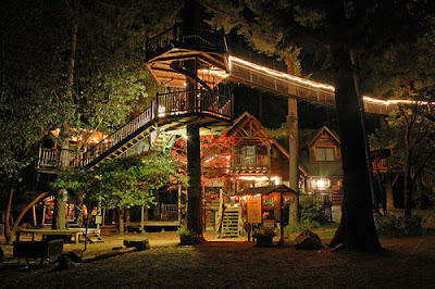 coolest Tree Houses