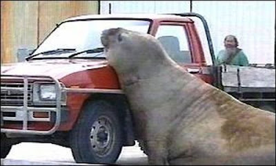 Car Is The Best Target When Animals Gone Wild Seen On  www.coolpicturegallery.us