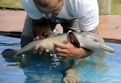 10-Day Old Baby Dolphin Rescued In Uruguay Seen On  www.coolpicturegallery.us