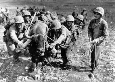 Animals in War Seen On www.coolpicturegallery.us