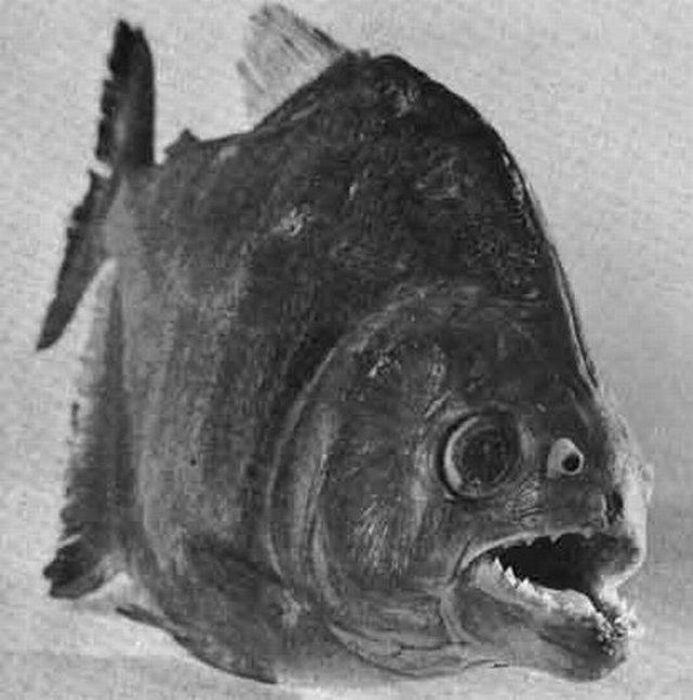 http://3.bp.blogspot.com/_mmBw3uzPnJI/TRBkATvz2nI/AAAAAAAB1Zo/r-RaeTSTHAg/s1600/ugliest_and_scariest_fishes_20.jpg