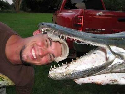 Alligator Gar Fish