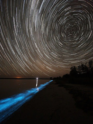 Bioluminescent Lake Glows Blue in Australia Seen On  www.coolpicturegallery.us