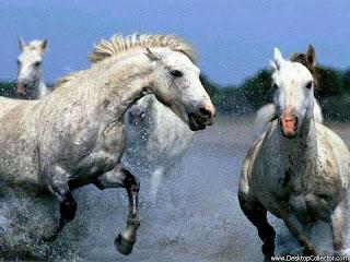 runing white Horses wallpaper