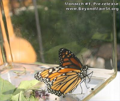 monarch release