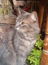 Mi gata Aigñe se la extraña